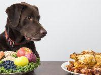Pet's Nutrition
